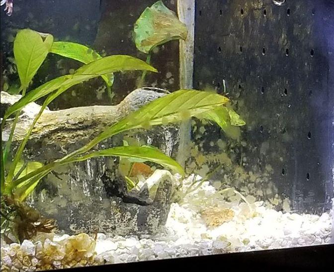 16 8 Brown Algae